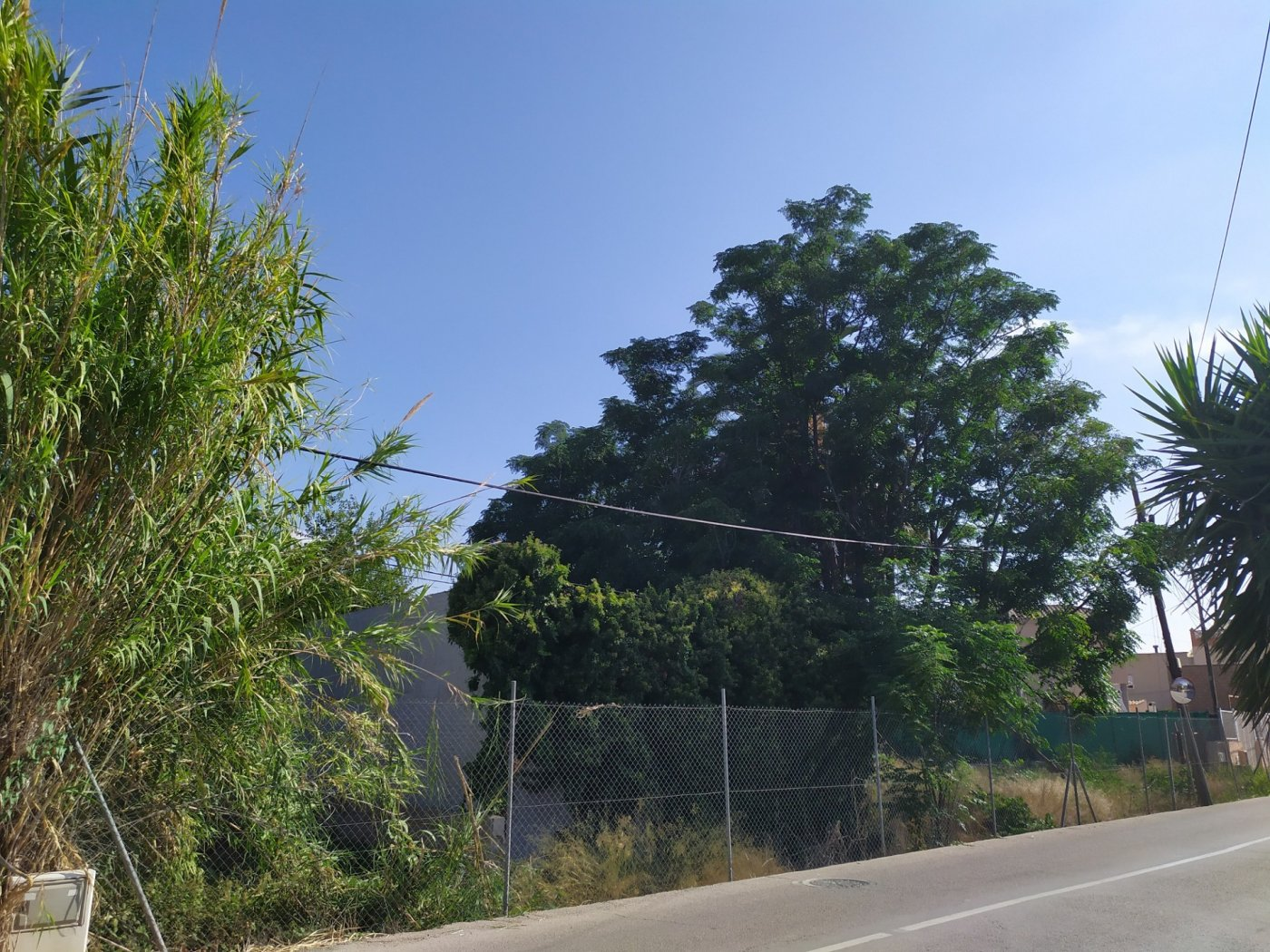 Gran terreno urbanizable en la arboleja - imagenInmueble5