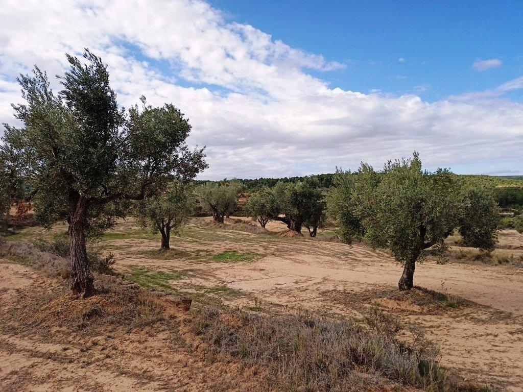 Apartamento, Raconal, Venta - Teruel (Teruel)