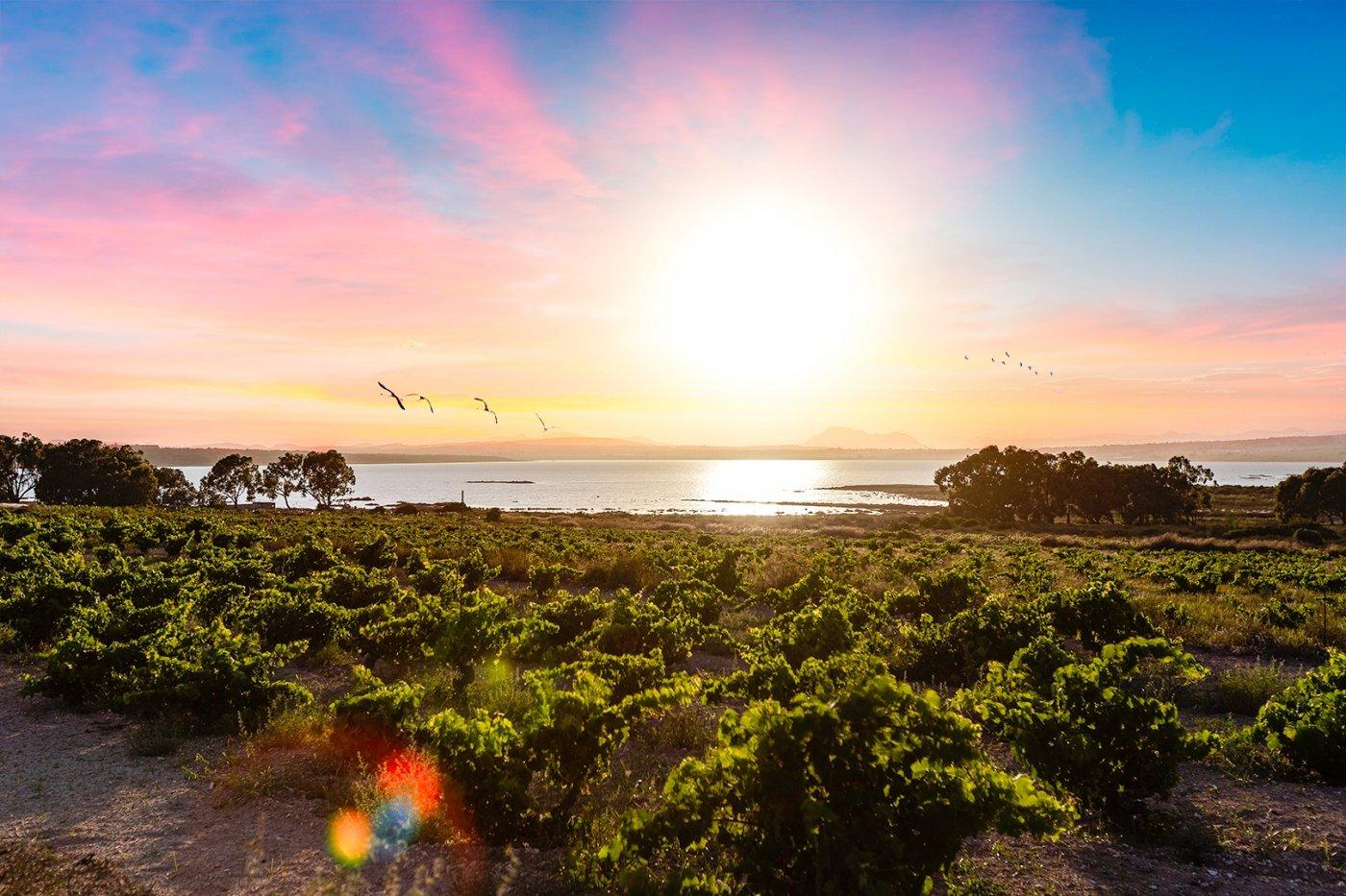 Bungalow Planta Baja · Torrevieja · El Limonar 39.800€€