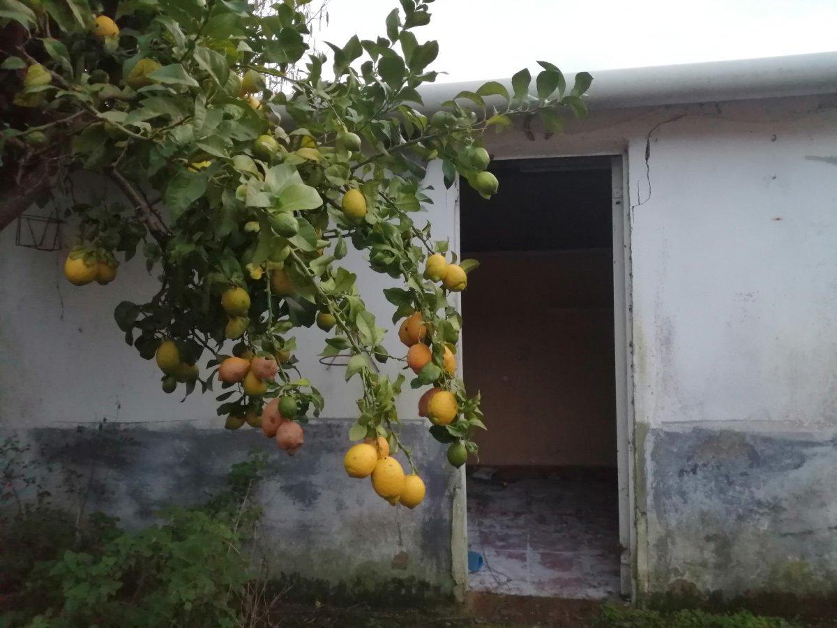 Planta baja en Arnuero - CANTABRIA